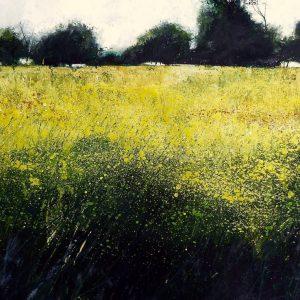 Breamore Marsh