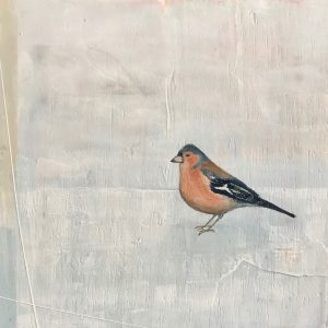 Jane Skingley, Chaffinch, oil on board,30x30cm