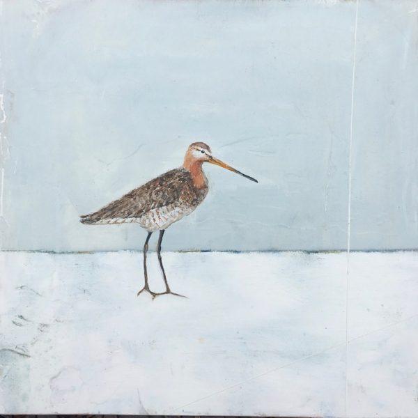 Jane Skingley, Snipe, oil on board, 30x30cm