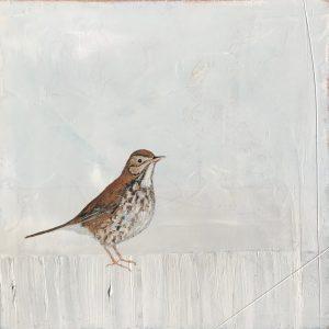 Jane Skingley, Song Thrush, oil on board, 30x30cm