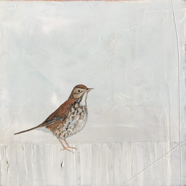 Jane Skingley, Song Thrush, oil on board, 30x30cm