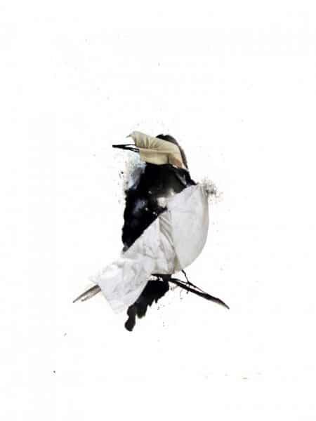 Starling II