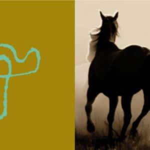 Crazy horse sml